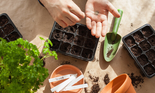 How to Grow a Garden (AND Save Money and Practice Social Distancing in the Process)
