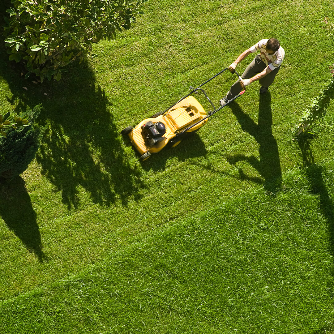 How to Save on Landscaping